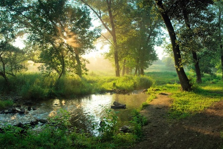 Beautiful summer morning in wood with sun rays and a fog from the river