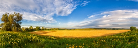 Panorama of a big summer field shined with the sun, with clouds in the sky on background photo