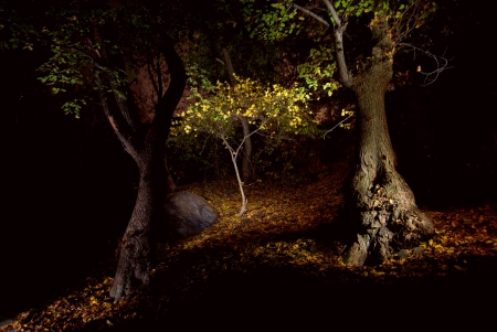 Fantastic landscape with magic light in night forest