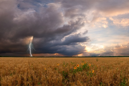 Summer landscape with wheat field and sunflower, thunderstorm with lightning on background Foto de archivo
