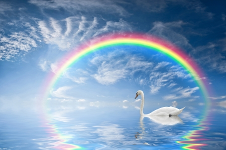 Beautiful seascape with rainbow reflection in water and a floating swan photo