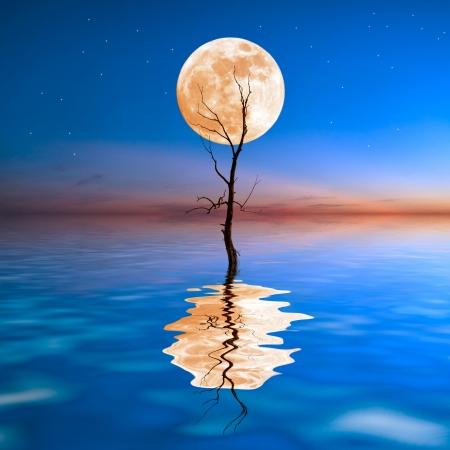 simbolo paz: Viejo árbol seco en agua con gran luna en el fondo, la reflexión en agua Foto de archivo