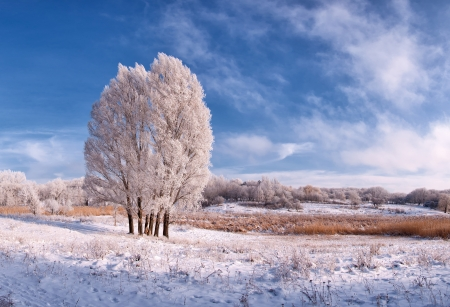 Winter landscape with frozen tree in field and blue sky with clouds