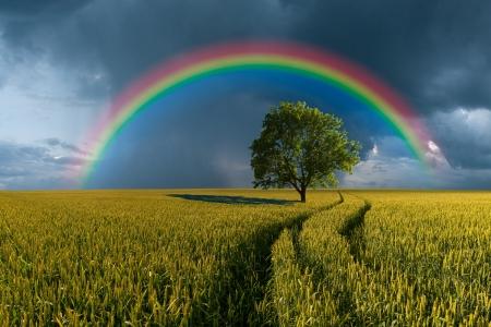 Zomer landschap met tarwe veld, weg en eenzame boom, onweer met regen op de achtergrond Stockfoto