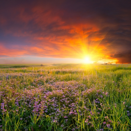 Summer landscape with flower meadow and majestic clouds in the sky on sunset photo