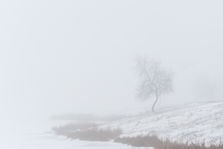 Lonely tree in fog, cloudy winter day, snow on the earth