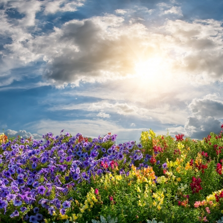 Beautiful summer landscape with flower meadow and majestic clouds in the sky photo