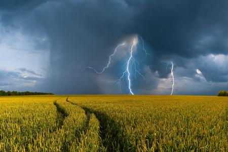 cielo tormenta: Paisaje de verano con campo de trigo grande y el camino, tormenta con lluvia en el fondo Foto de archivo