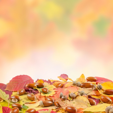 Autumn leaves and acon on colorful background with place for your text photo
