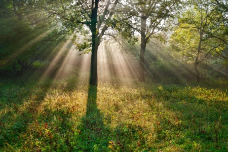 The bright sun rays shining through branches of trees, wood landscape Stock Photo
