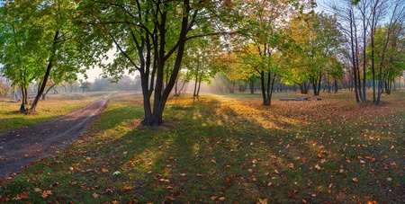 Panorama of the maple wood with road strewn with yellow leaves, autumn landscape