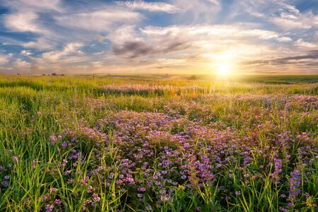Summer landscape with flower meadow and majestic clouds in the sky on sunrise photo