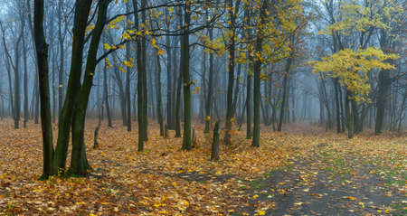 Beautiful autumn landscape with fog in forest, fallen leaves and road, outdoor photo