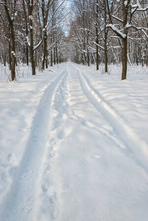 Tire trace on snow in park, beautiful sunny day, winter landscape photo