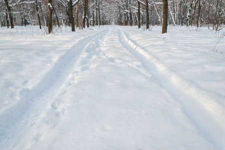 space weather tire: Tire trace on snow in park, beautiful sunny day, winter landscape
