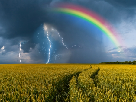 rainstorm: Summer landscape with big wheat field and road, thunderstorm with rain and rainbow on background