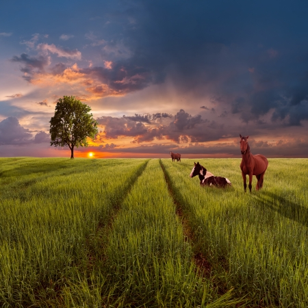 Evening landscape with a green field and the road, a tree on the horizon and horses against a majestic decline Stock Photo - 18227967