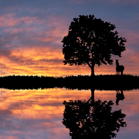 Evening landscape with silhouette of tree and horse against a majestic decline Stock Photo - 18347309