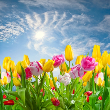 Spring landscape with tulip flowers and beautiful clouds and sun in the sky Фото со стока - 18347310