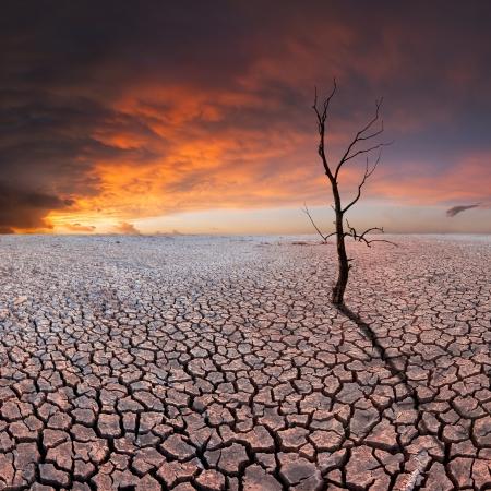 乾燥した地球、空、生態災害で雄大な土塊の乾燥木