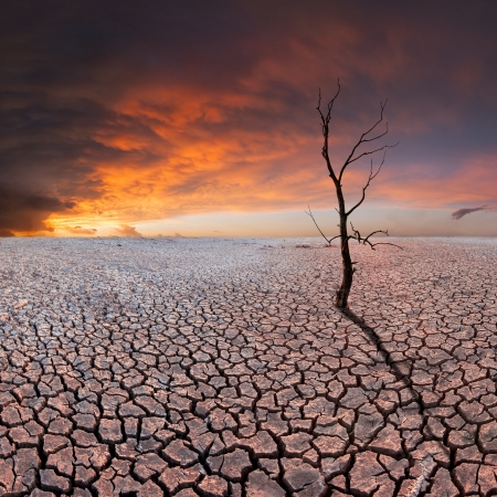 Dry tree on dry earth, majestic clods in the sky, ecology disaster Stock Photo