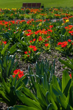 spring landscape with tulip and narcissus flowers meadow in park stock photo picture and royalty free image image 19488506 - Tulip Garden Near Me