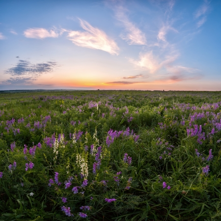 Spring meadow with flower, majestic clouds in the sky on sunrise, beautiful landscape photo