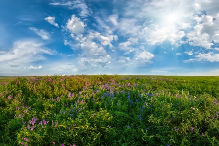 Summer landscape with flower meadow, sun and clouds in sky photo