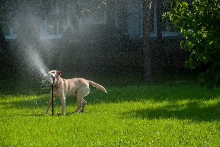 Happy dog play in the meadow with a watering fountain photo