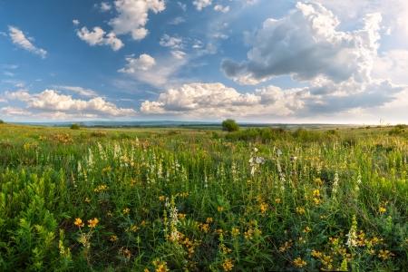 花の草原、太陽、雲空、夏の風景に