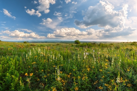 Flower meadow, sun and clouds in sky, summer landscape