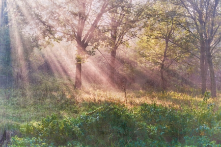 The bright sun rays shining through branches of trees, vintage landscape