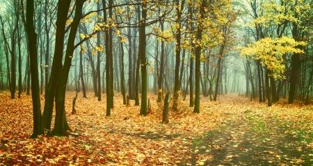 霧の森、落ち葉の道ある美しいビンテージ秋の風景