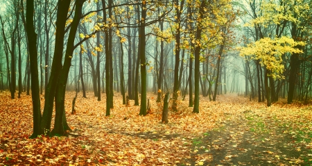 Beautiful vintage autumn landscape with fog in forest, fallen leaves and road Standard-Bild
