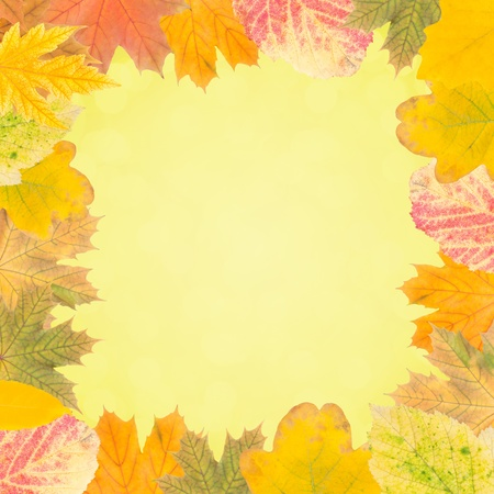 Autumn wallpaper with bright leaves for design, foliage frame photo