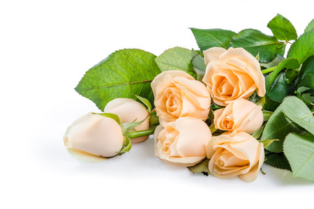 Beautiful cream rose flowers isolated on white background Stock Photo - 25477060