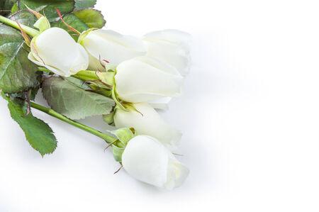 Beautiful rose flowers isolated on white background Stock Photo - 25477089