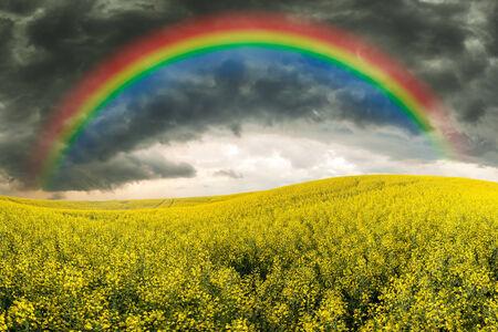 菜種フィールド、荒れ模様の空と虹 写真素材