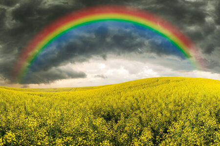 Rapeseed field, stormy sky and rainbow