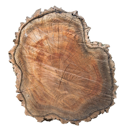 Cross section of tree trunk with bark isolated on white background Фото со стока
