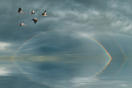 Rainbow in sky and flying cranes photo