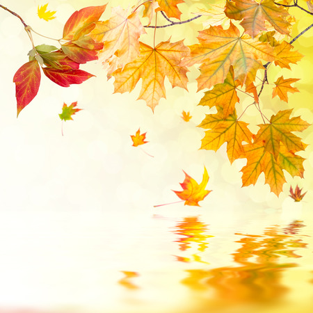 brigth: Brigth autumn background with foliage Stock Photo