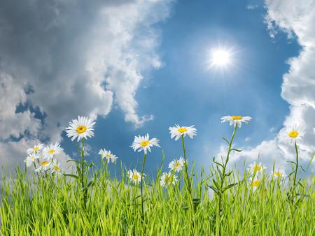 はす花の背景 写真素材