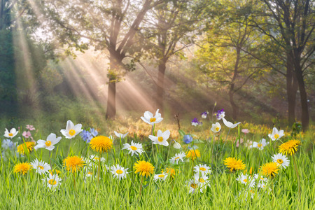 Beautuful floral background Фото со стока