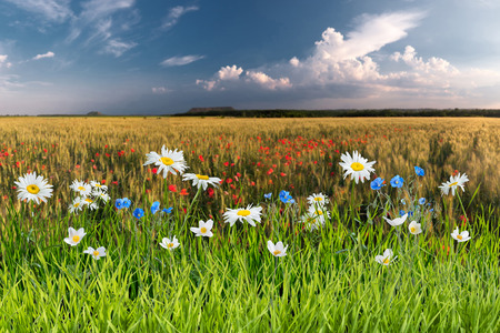 Summer landscape with beautiful flowers