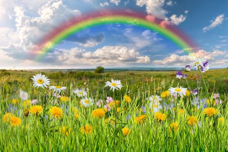 Paysage d'été avec de belles fleurs Banque d'images