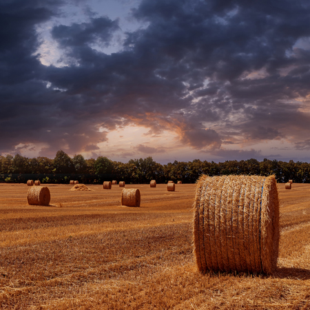 The sloping wheat field with haystacks on sunset photo