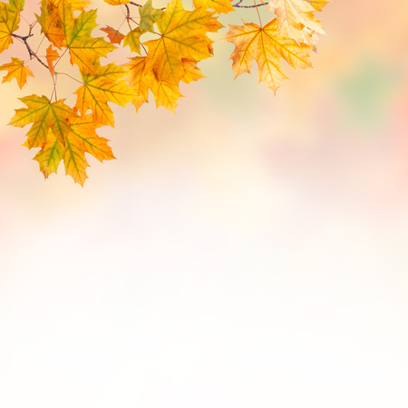 Autumn background with bright leaves photo