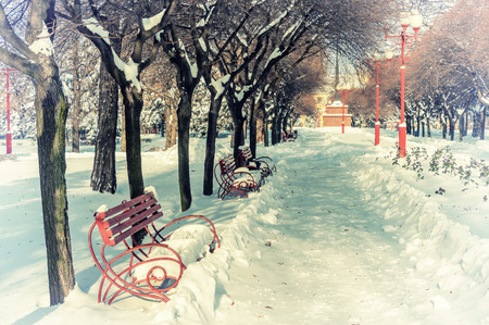 Vintage benches in winter sunny park