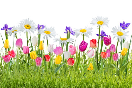 Lovely spring background with flowers and grass isolated